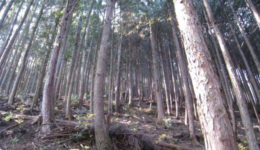 日本の森林の現状